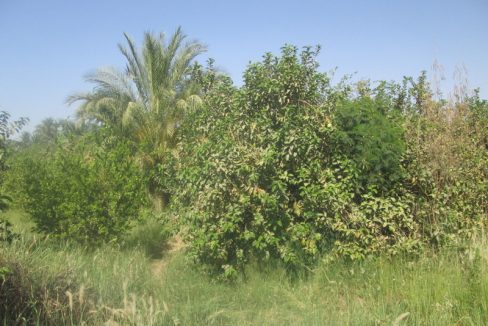 LAN2106 fruit full and productive land with area of 74 carats