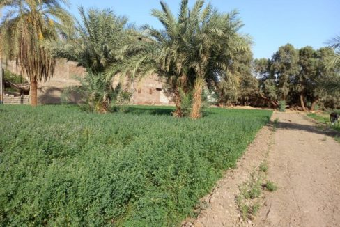 LAN2123S Est bank for sale in Luxor